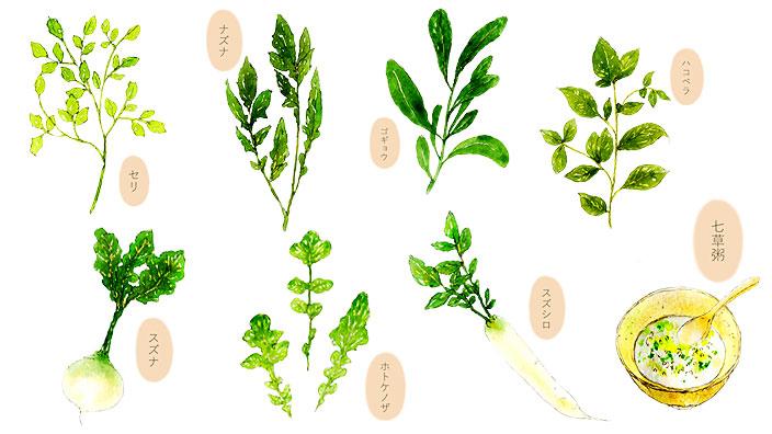 春の七草イメージ