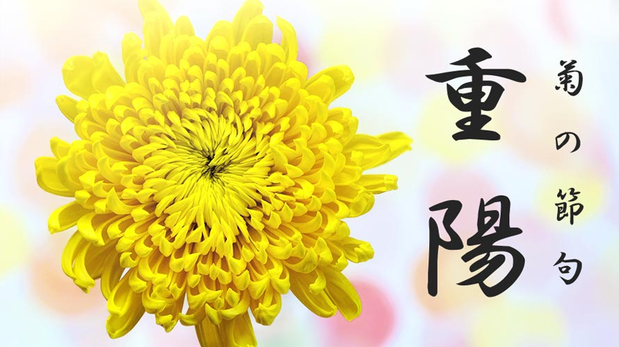 重陽の節句・菊の節句の意味と歴史についての記事イメージ(アイキャッチ用)