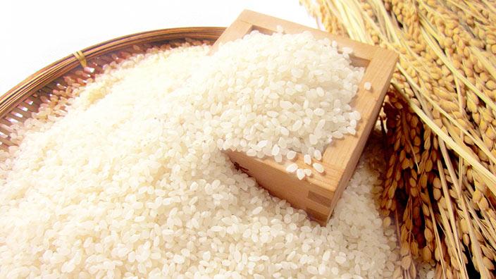 お米と稲穂のイメージ