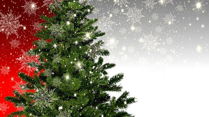 常緑樹/クリスマスツリーのイメージ